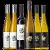 Herbst Wein Julia Schittler
